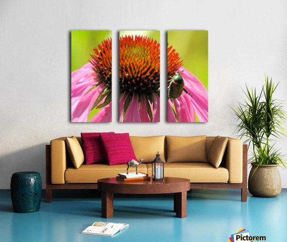 Echinacea and the Bee in Lincoln Park VP6 Split Canvas print