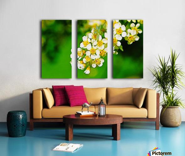 Springtime Split Canvas print