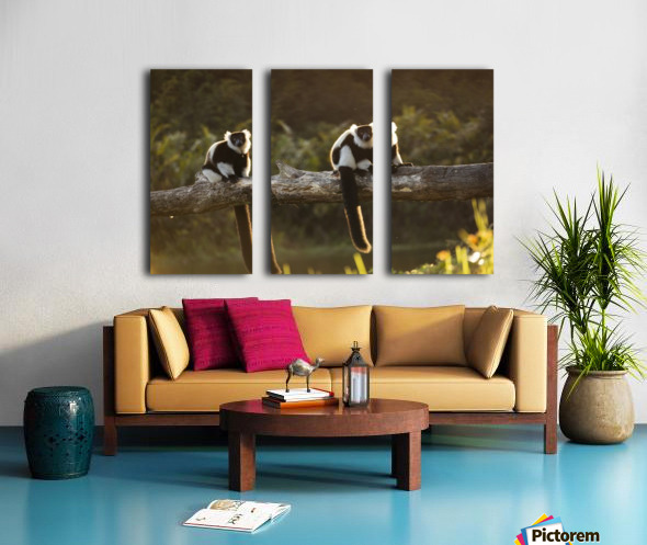 Lemur in his natural habitat, Madagascar Split Canvas print
