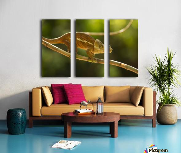 Chameleon in his natural habitat, Madagascar Split Canvas print