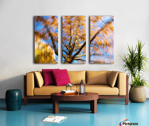 Autumn season in the middle of forest with colourful leaves Split Canvas print