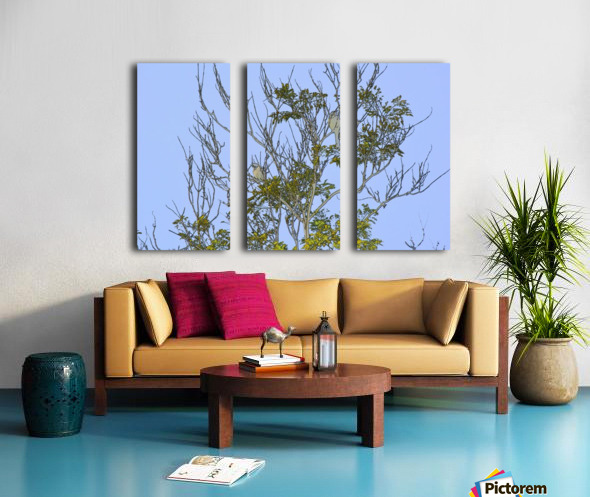 Two Blue Jays in Tree 2 abstract Split Canvas print
