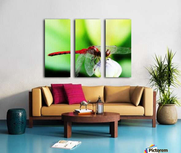 Red Dragonfly 3 Split Canvas print