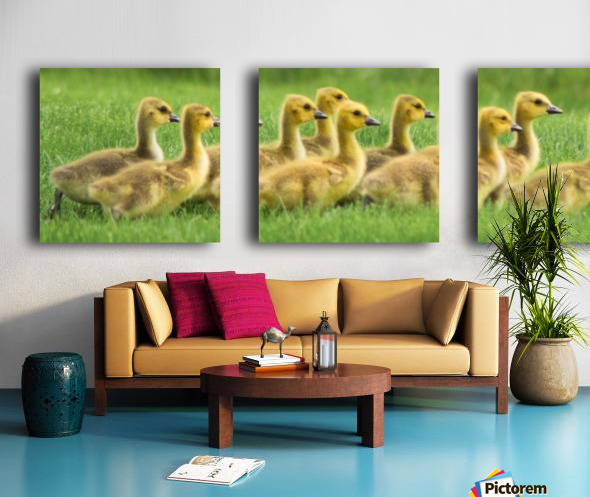 Get Your Geese in a Row Split Canvas print