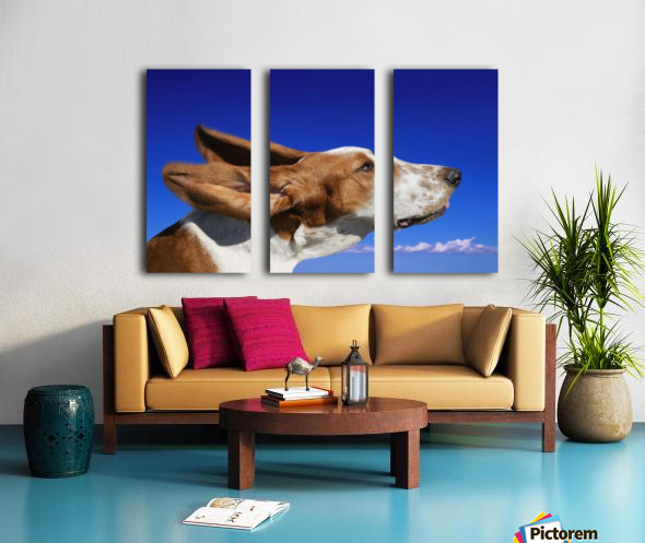 Dog With Ears In The Wind Split Canvas print