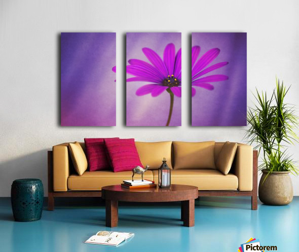 Purple Osteospermum Split Canvas print