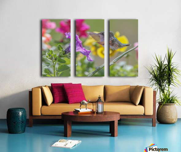 Humming Bird Purple Flower Photo by Jason Andrew Smith Split Canvas print