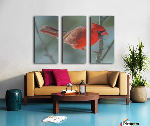 Cardinal Photo by Jason Andrew Smith Split Canvas print