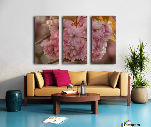 Apple Blossoms Split Canvas print