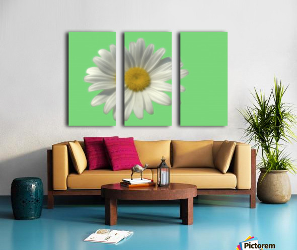 Soft bloom daisy Split Canvas print
