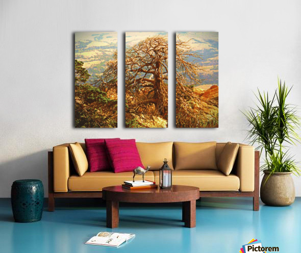 mtscotttreeone Split Canvas print