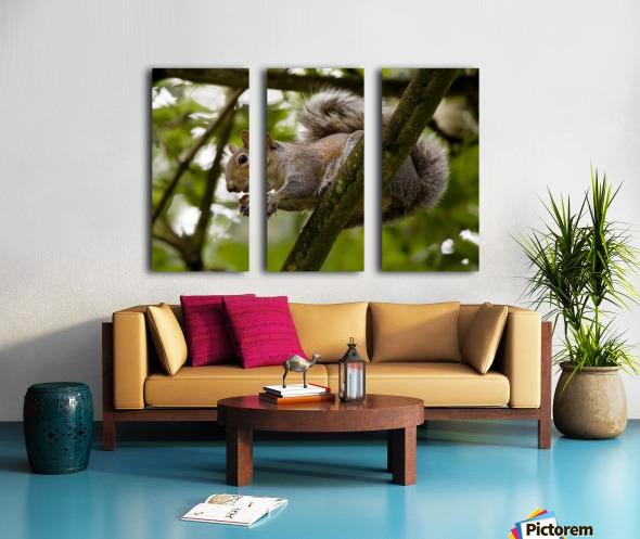 Gray Squirrel On A Tree Branch Split Canvas print
