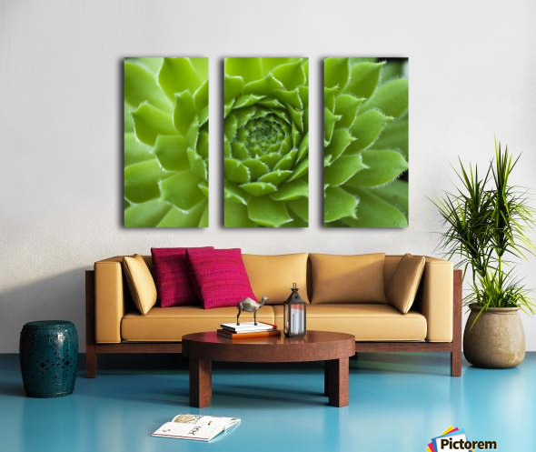 Succulent Split Canvas print
