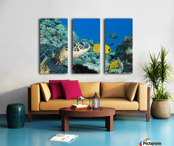 USA, Green Sea Turtle (Chelonia Mydas) Endangered Species And Butterfly Fish; Hawaii Islands Split Canvas print