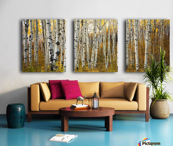 Colorado, Steamboat, Aspen Tree Trunks In Grove, Yellow Autumn Leaves. Split Canvas print