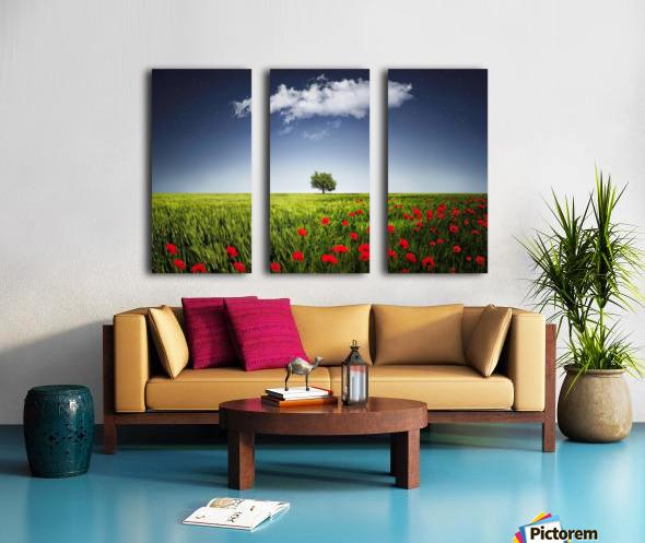 Lone tree a poppies field Split Canvas print