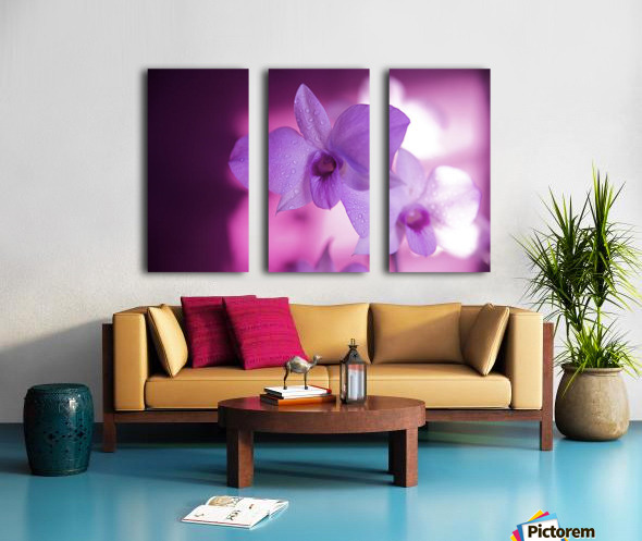 Hawaii, Kauai, White Orchid With Pink Lighting. Split Canvas print