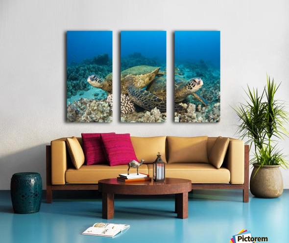 Hawaii, Green Sea Turtles (Chelonia Mydas) Over Coral Reef. Split Canvas print