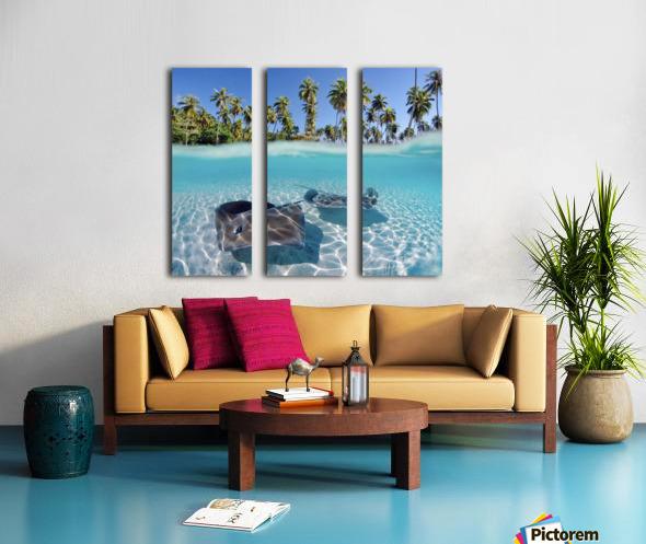 French Polynesia, Tahiti, Moorea, Two Stingray In Beautiful Turquoise Water. Split Canvas print