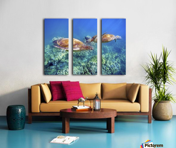 Hawaii, Two Green Sea Turtles, (Chelonia Mydas) An Endangered Species. Split Canvas print