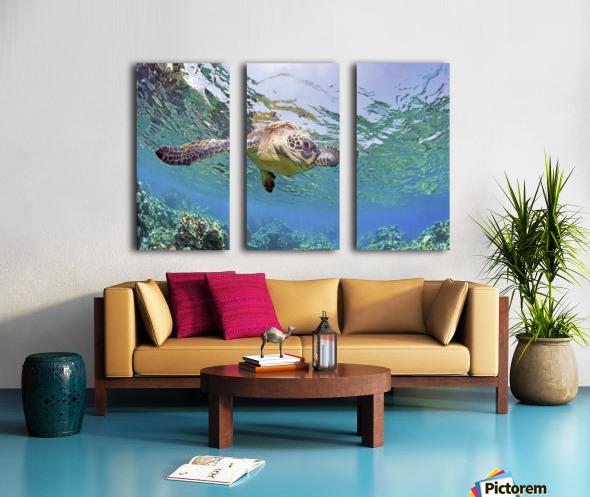 Hawaii, Green Sea Turtle (Chelonia Mydas) An Endangered Species. Split Canvas print