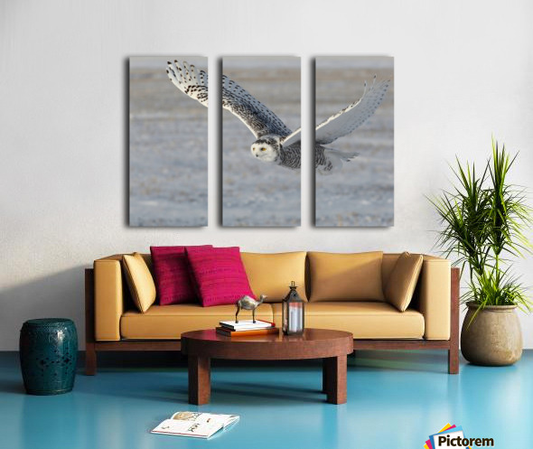 Snowy Owl in flight 6 Split Canvas print