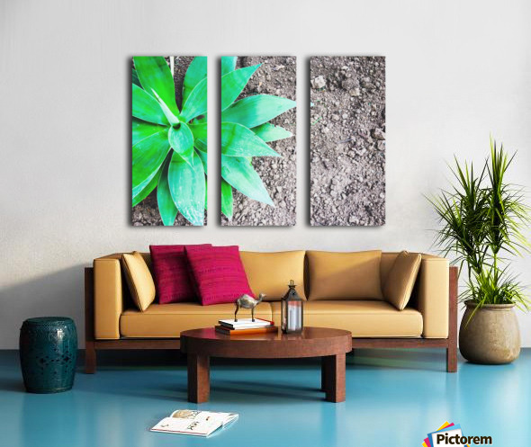 green leaf plant with sand background Split Canvas print