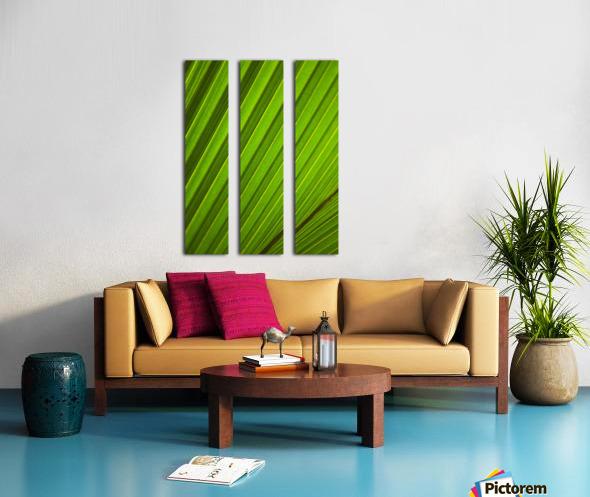 Graphic Detail Of Coconut Palm Leaf. Split Canvas print