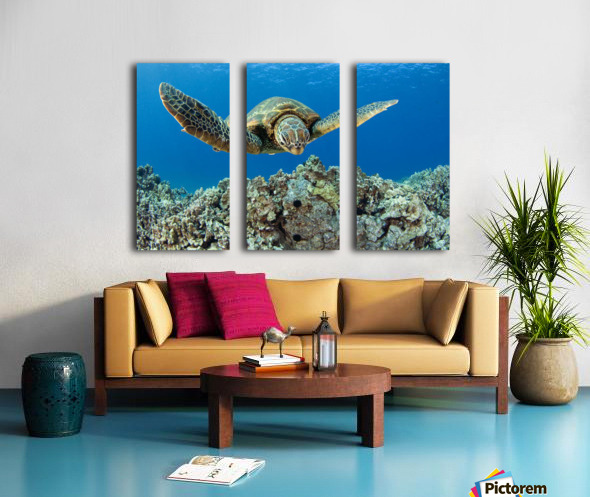 USA, Green Sea Turtle (Chelonia Mydas); Hawaii Split Canvas print
