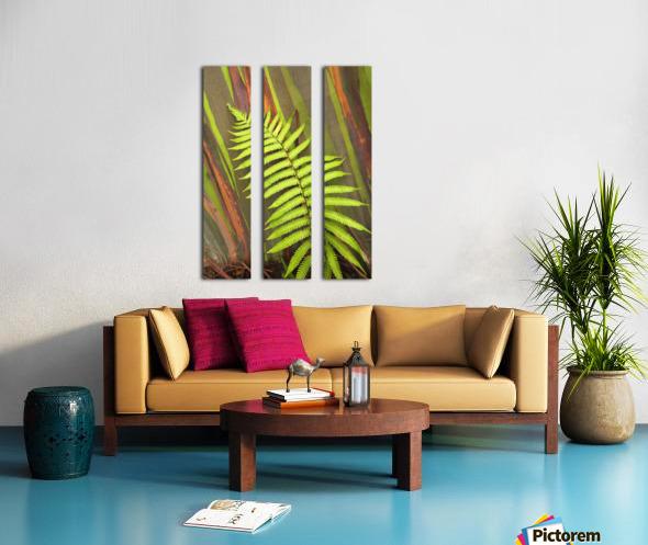Hawaii, Maui, Hana, Fern And Rainbow Eucalyptus Tree. Split Canvas print