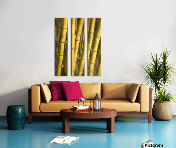 Close-Up Of Bamboo Stalks. Split Canvas print
