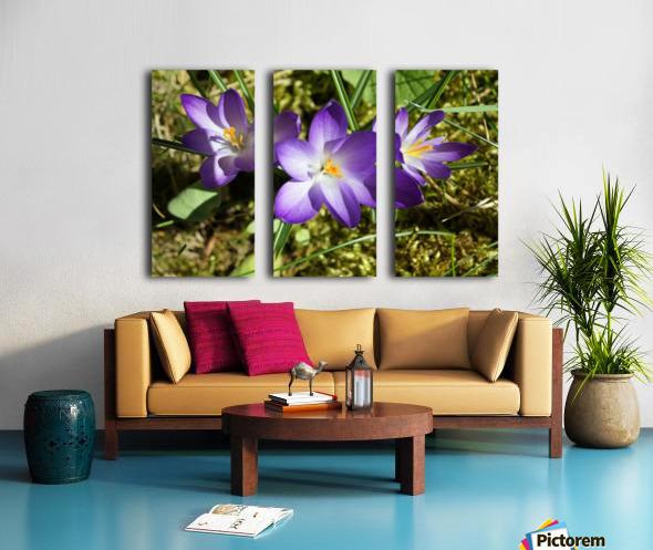 DSC06574 Split Canvas print