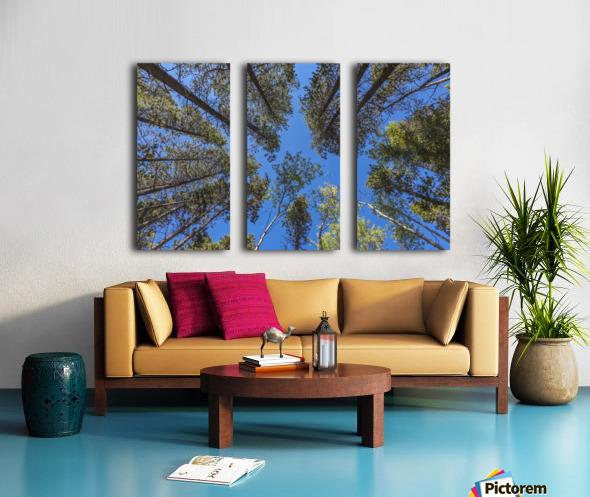 Tree Tops Near Grassi Lake Trail, Alberta Split Canvas print