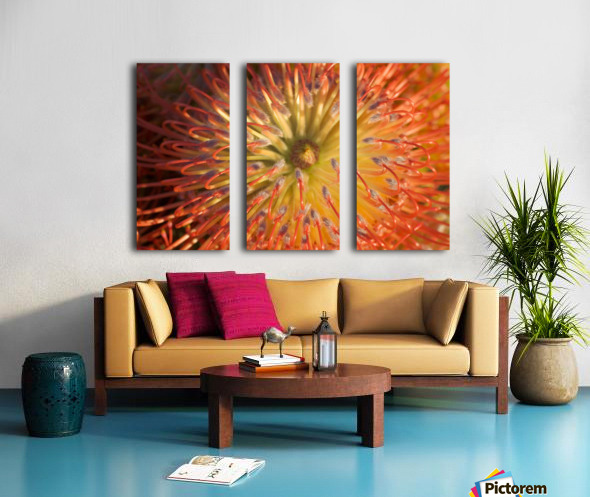 Close-Up Top View Red Pin Cushion Protea Blossom Or Leucospermum, Texture Detail Split Canvas print