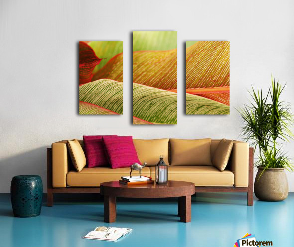 Indonesia, Bali, Close-Up Of Tropical Plants, Leaves Canvas print