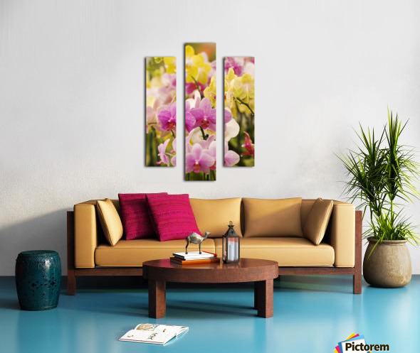 Hawaii, Field Of Pink And Yellow Orchids. Canvas print