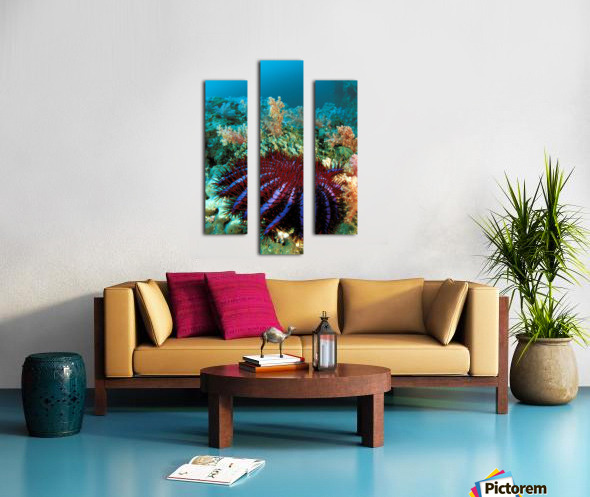 Thailand, Reef Scene With Crown-Of-Thorns Starfish (Acanthaster Planci). Canvas print