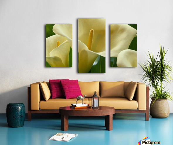 Hawaii, Big Island, Volcano, Calla Lilies, Close-Up B1587 Canvas print