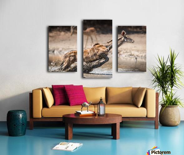 Kudu jump Canvas print