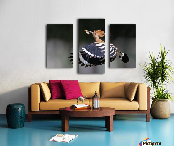 Hoopoe,Feeding.. Canvas print