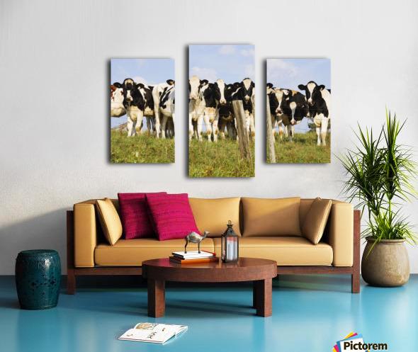 View Of Cows, Bas-Saint-Laurent Region, Quebec, Canada Canvas print