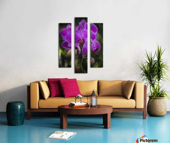 Phalaenopsis orchids in bloom; Kailua, Island of Hawaii, Hawaii, United States of America Canvas print