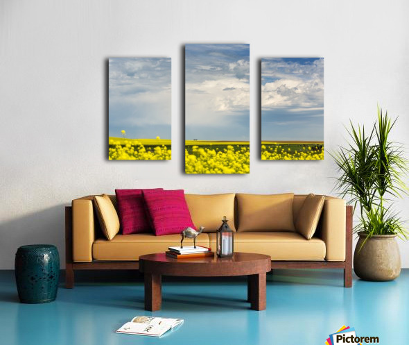 Flowering canola field with dark storm clouds and cattle grazing; Nanton, Alberta, Canada Canvas print