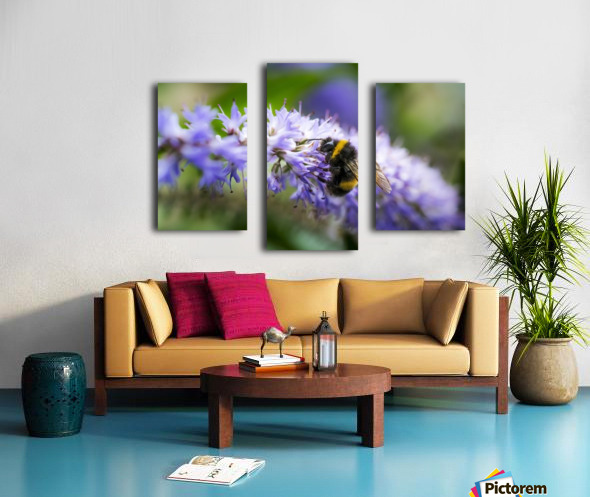 A bee resting on a purple flower; South Shields, Tyne and Wear, England Canvas print