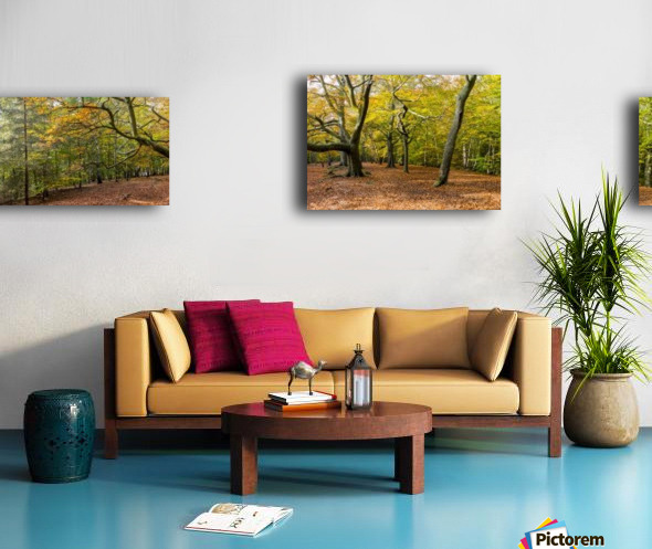 Panorama of a forest in autumn colours; Surrey, England Canvas print