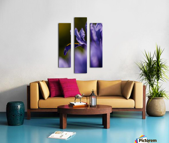 The dwarf Iris is one of the first flowers to bloom in the spring; Oregon, United States of America Canvas print