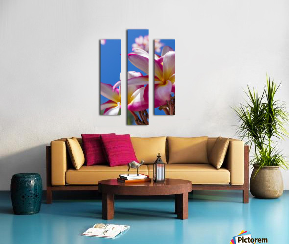 Close-up of pink plumeria flowers and blue sky; Lanai, Hawaii, United States of America Canvas print
