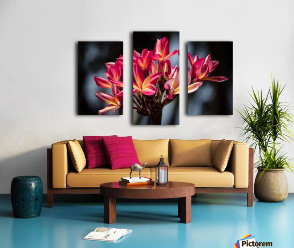 Close-up of bright pink plumeria flowers; Maui, Hawaii, United States of America Canvas print