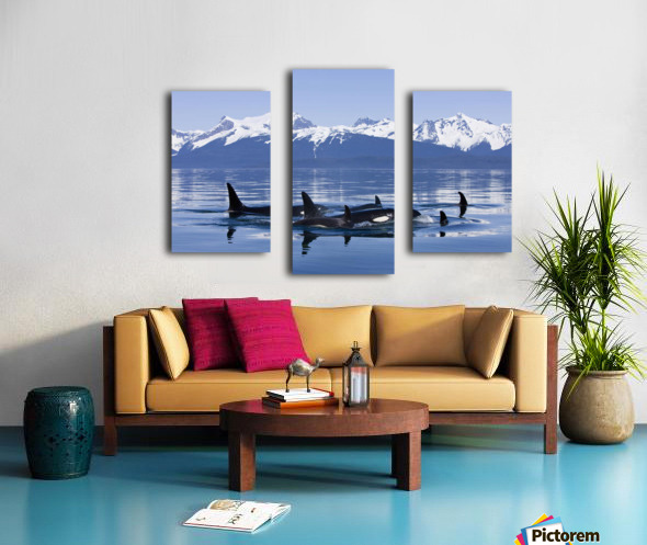 Orca Surface In Lynn Canal Near Juneau With Coast Range Beyond, Inside Passage, Alaska Canvas print