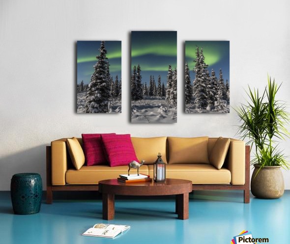 Green Aurora Borealis dances over the tops of snow covered black spruce trees, moonlight casting shadows on a clear winter night, interior Alaska; Gakona, Alaska, United States of America Canvas print